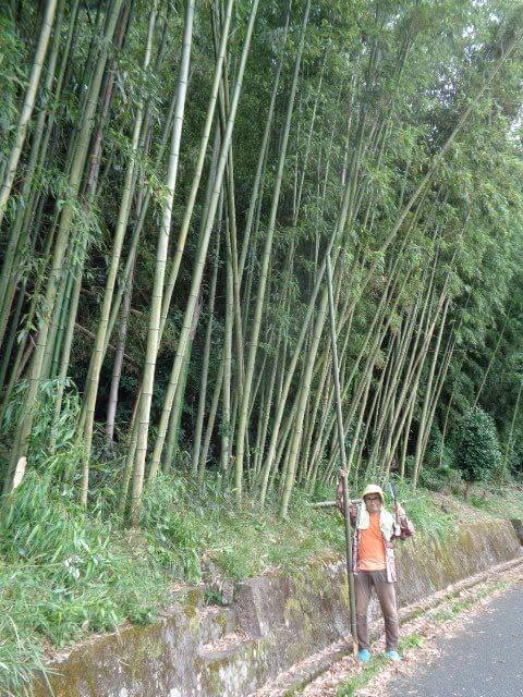 JAFAREC Ten-Sho-An bamboo woods