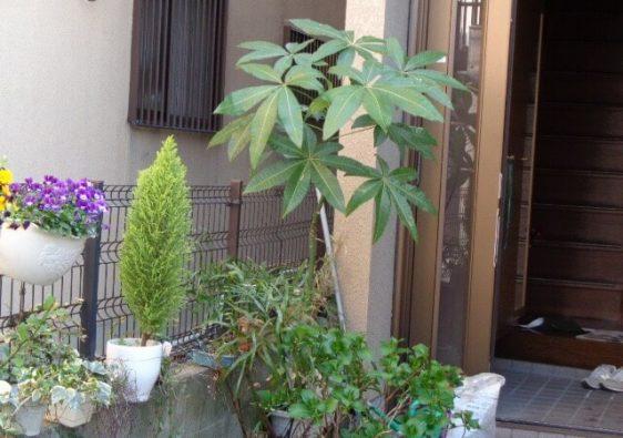 JAFAREC veranda garden