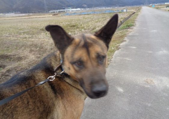 JAFAREC Ten-Sho-An Neo dog face