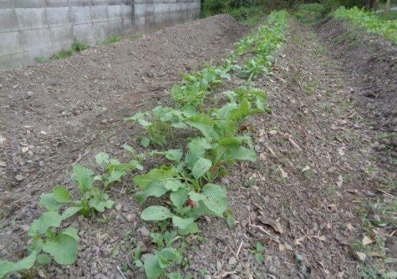 JAFAREC Ten-Sho-An Vegetable field