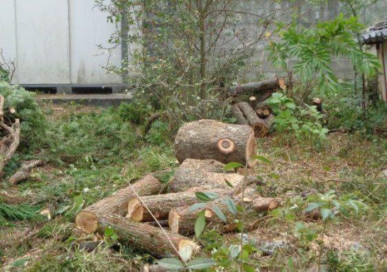 JAFAREC Ten-Sho-An timbers