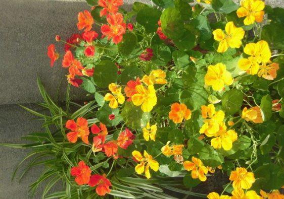 JAFAREC flowers