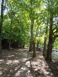 JAFAREC Yamashina woods