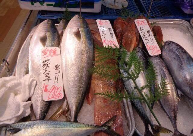 JAFAREC yellowtail fish