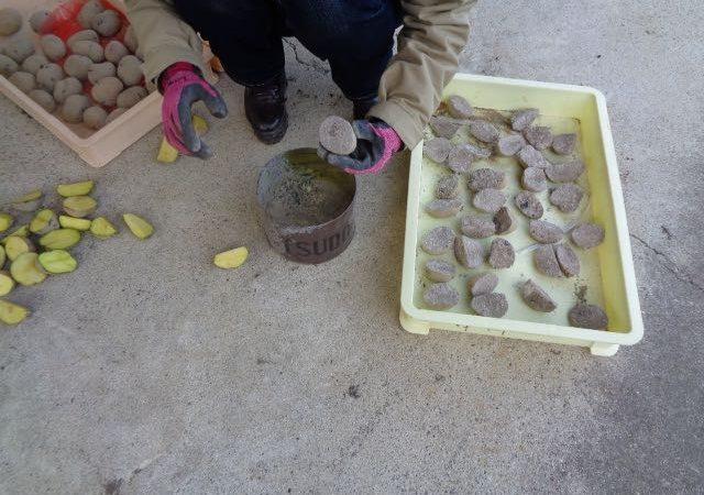 JAFAREC Ten-Sho-An Vegetables Kitaakari potatoes