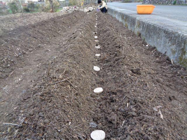 JAFAREC Ten-Sho-An Vegetables Kitaakari potatoes planting 2