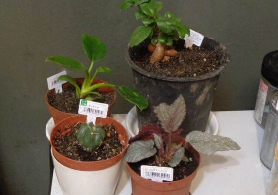 JAFAREC plants Hinode maru
