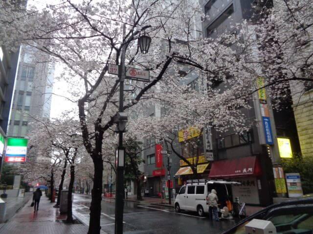 Namiki-dori street Tokyo