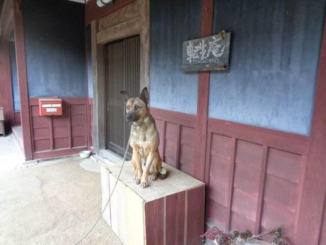 Therapy Dog Neo JAFAREC Ten-Sho-An