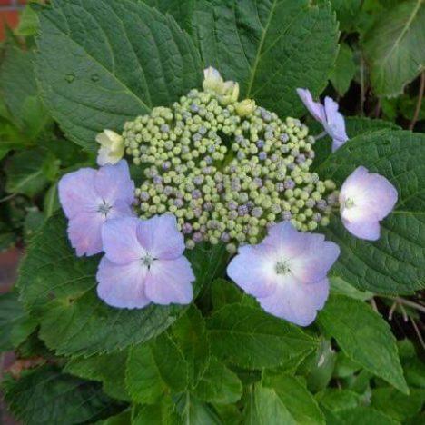 Still… The joy of flowers